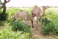 Lire la suite: Farah-Tour Meknes